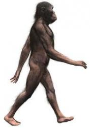 australopitheque.jpg