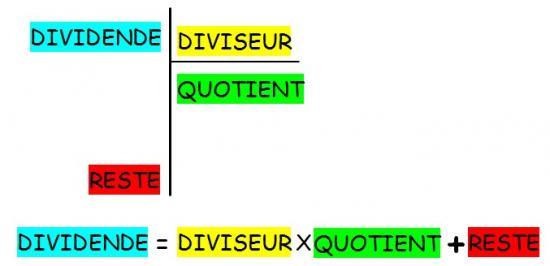 division-termes-1.jpg